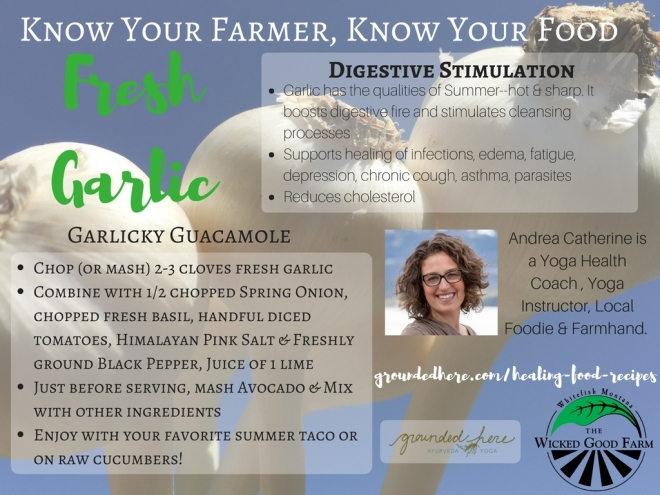 Know Your Farmer Fresh Garlic (1)